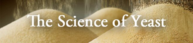 The-Science-of-Yeast.png